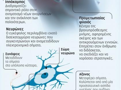 Η χρήση κάνναβης επηρεάζει την ανάπτυξη του εφηβικού εγκεφάλου
